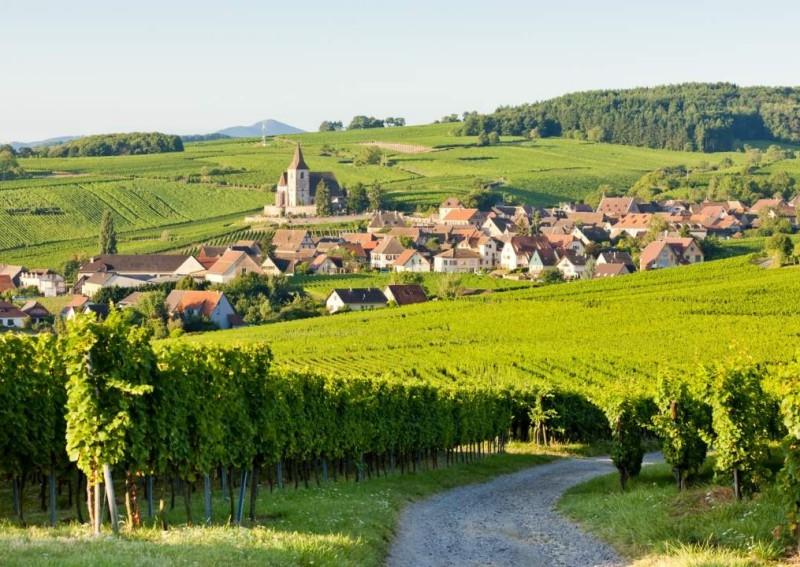 meilleures activités evjf strasbourg - wine tour evjf strasbourg